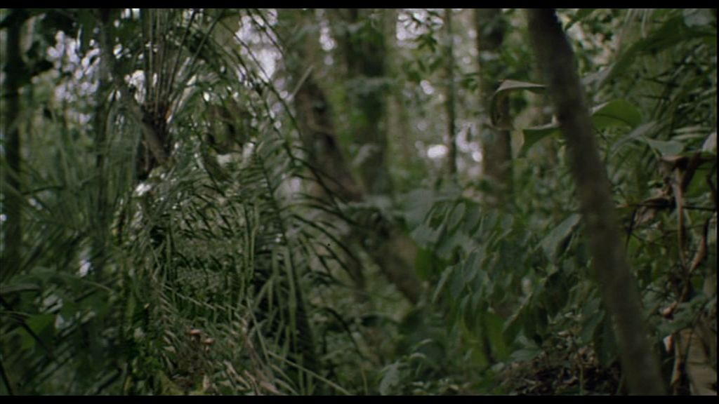 http://spacefiction.files.wordpress.com/2010/12/predator_camouflage.jpg